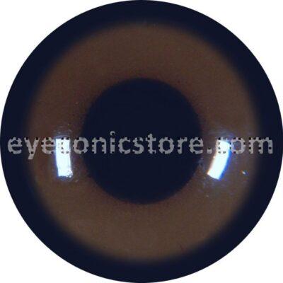 Common Buzzard Juvenile Eye