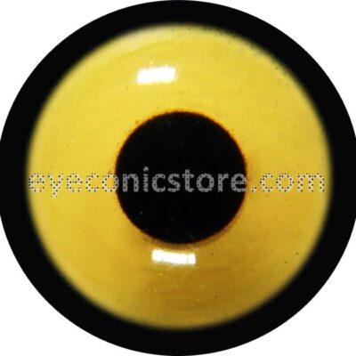 Northern Goshawk Juvenile American Eye