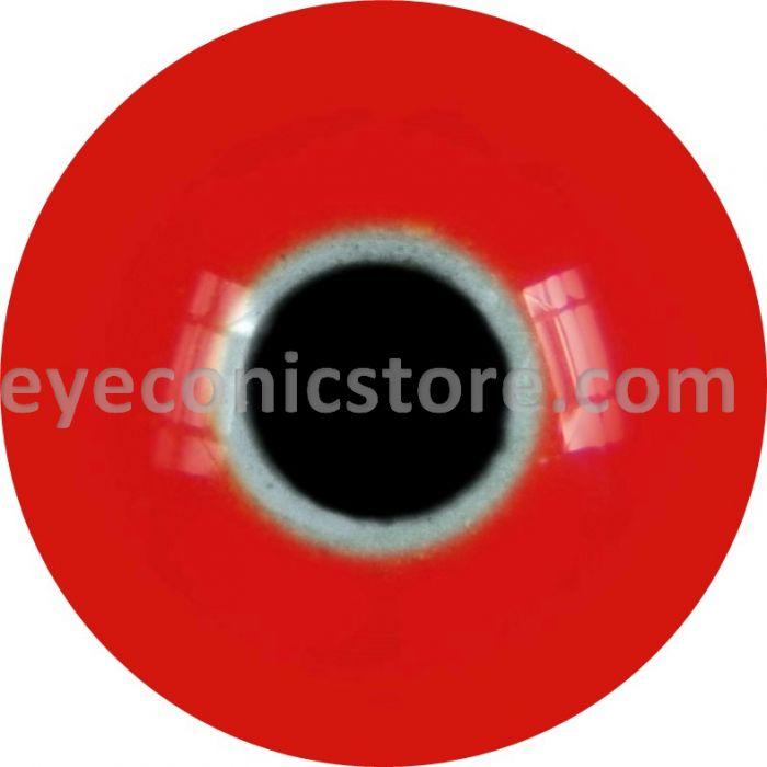 Red Collared Lorikeet