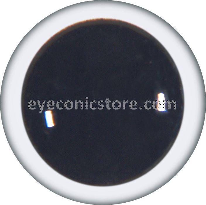 Manx Shearwater Eye