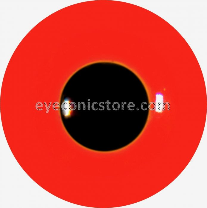 Red Crested Pochard