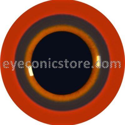 Moorhen Eye