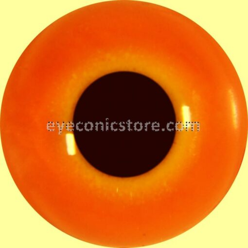 Cockerel - Chicken Eye
