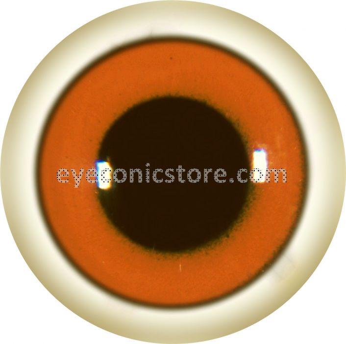 Cotton Eared Marmoset Eye