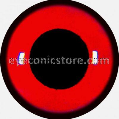 European Spoonbill Eye