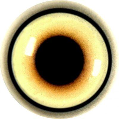 Wolf Acrylic Eye